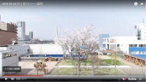 屋上に満開の桜が?! ドローンで空撮してみました。